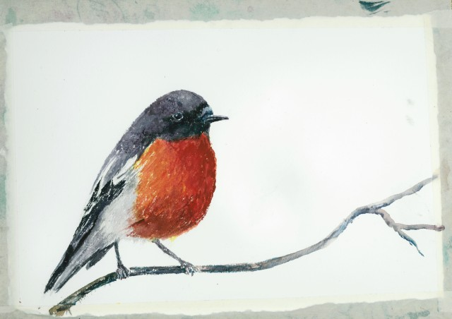 Watercolour, flame robin, a work in progress