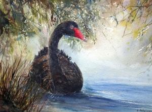 Afternoon swim, Black swan