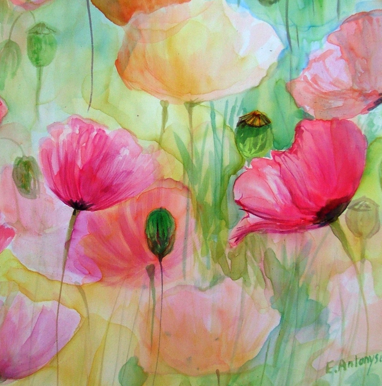 Free Spirits.... poppies are my favourite flower to paint on silk. Watercolour technique, allowing free movement of dyes but careful brush selection.