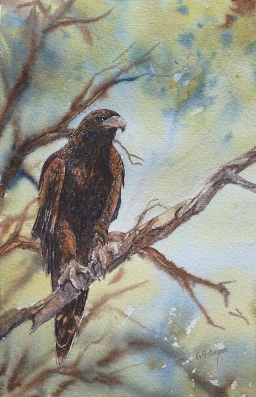 wedge-tail-eaglein-the-treetop