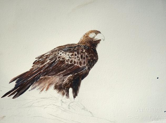 wip-eagle